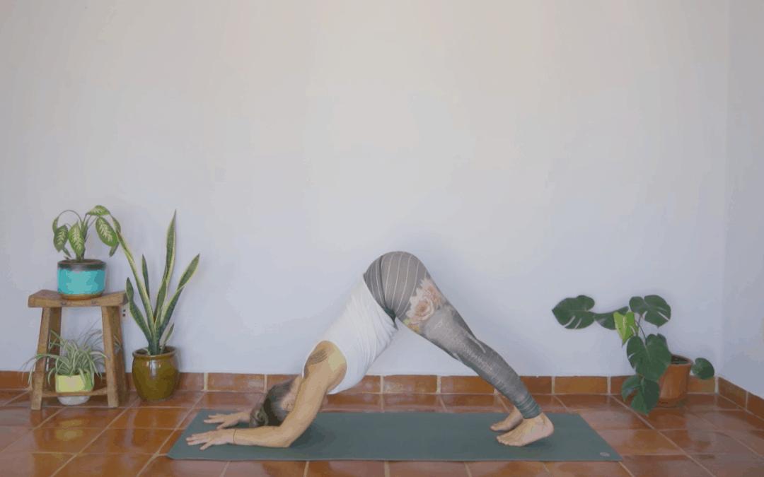 Dolphin – Ardha Pincha Mayurasana Tutorial